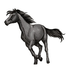 White horse freely running portrait vector image vector image