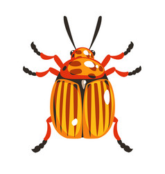 Colorado potato beetle colorful cartoon character vector