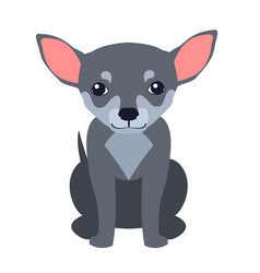 cute chihuahua dog cartoon flat icon vector image