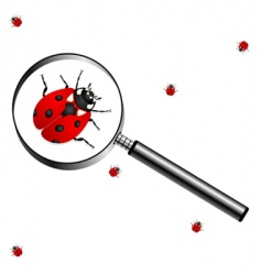 magnifying glass with lady bugs vector image