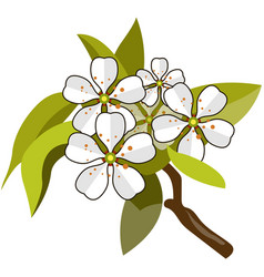 Blossom apple tree branch flat isolated vector