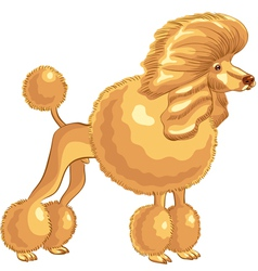 Poodle sketch vector