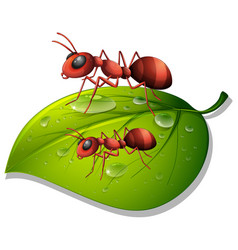 Red ants on green leaf on white background vector