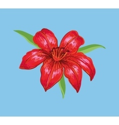 Red lily on a blue background vector