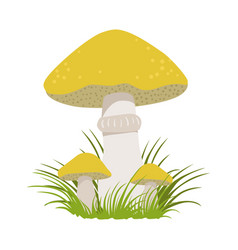 slippery jack suillus luteus edible forest vector image vector image