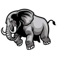 charging elephant vector image