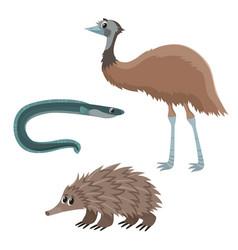 Emu eel and echidna vector