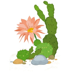 Hand drawn cactus blooms vector image