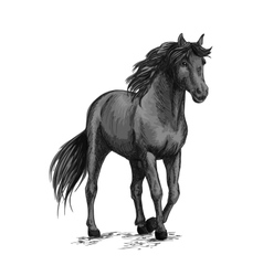 Horse walking in slow gait sketch portrait vector