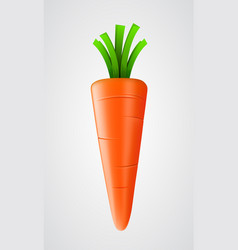 fresh carrot isolated on white vector image vector image