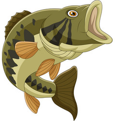 cartoon bass fish isolated on white background vector image