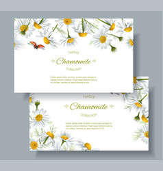 Chamomile flower banners vector