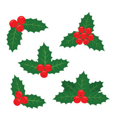 holly plant a set vector image