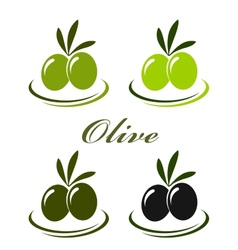 Set with colorful olives vector