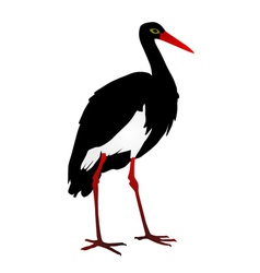 silhouette of a Grus vector image
