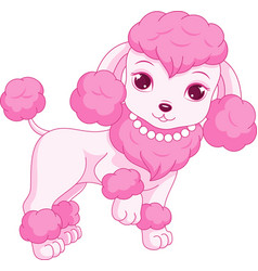 Cute pink poodle vector