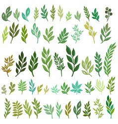 Drawing green leaves vector