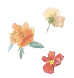Set of flowers viola violet Watercolor vector image