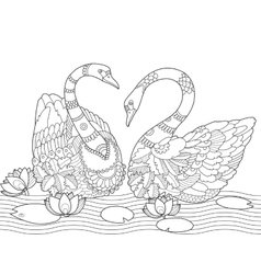 swan coloring book for adults vector image