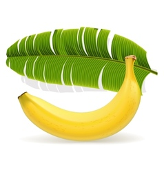 Ripe yellow banana with leaf vector image vector image