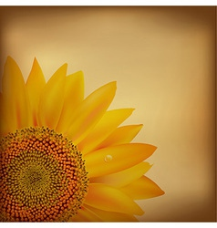Vintage Paper With Sunflower vector image