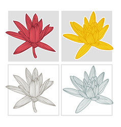 Hand drawn lotus flower vector