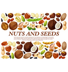 poster of nuts and fruit seeds vector image