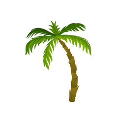 Tall palm tree with large bright green leaves vector