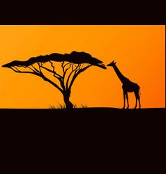 black silhouette of a giraffe and acacia vector image