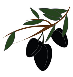 black olives on a branch simple on white vector image
