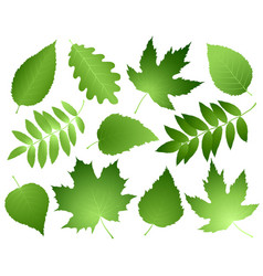 Green leaves and branches set vector
