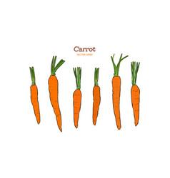 hand drawn carrot set vector image
