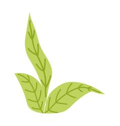 leaves plant vegetation botanical cartoon isolated vector image