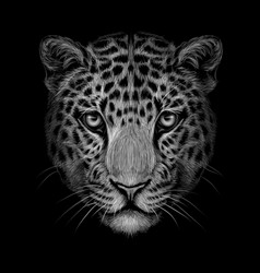 Monochrome black and white portrait jaguar loo vector
