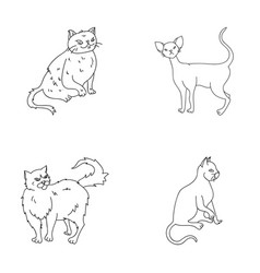Persian cornish rex and other species cat breeds vector