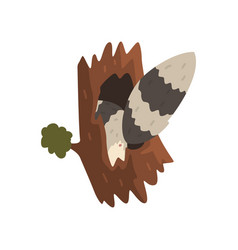 Tail raccoon sticking out hollow tree vector