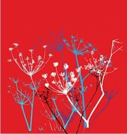 delicate flower vector image vector image