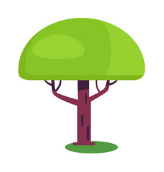 Baobab short tree with an enormously thick trunk vector