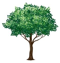foliage tree vector image