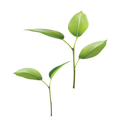 Plant green leaf grow 3d vector