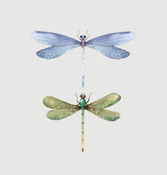 Watercolor summer dragonfly insect vector