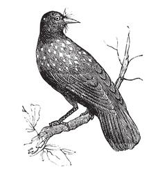 Nutcracker vintage engraving vector image vector image