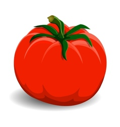 Red tomato on white background vector image vector image