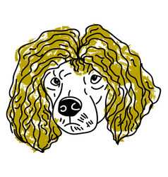 poodle with hair on white background vector image
