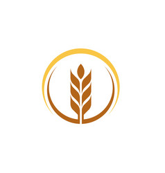 Agriculture wheat vector