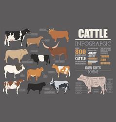 Cattle breeding infographic template flat design vector