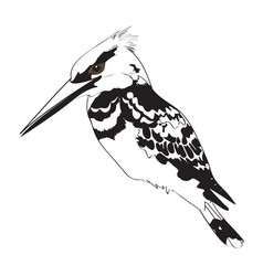 Black and white kingfisher vector
