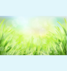 grass glare and effect bokeh vector image