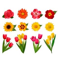 Set beautiful flowers vector