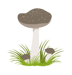 tricholoma portentosum forest mushrooms colorful vector image